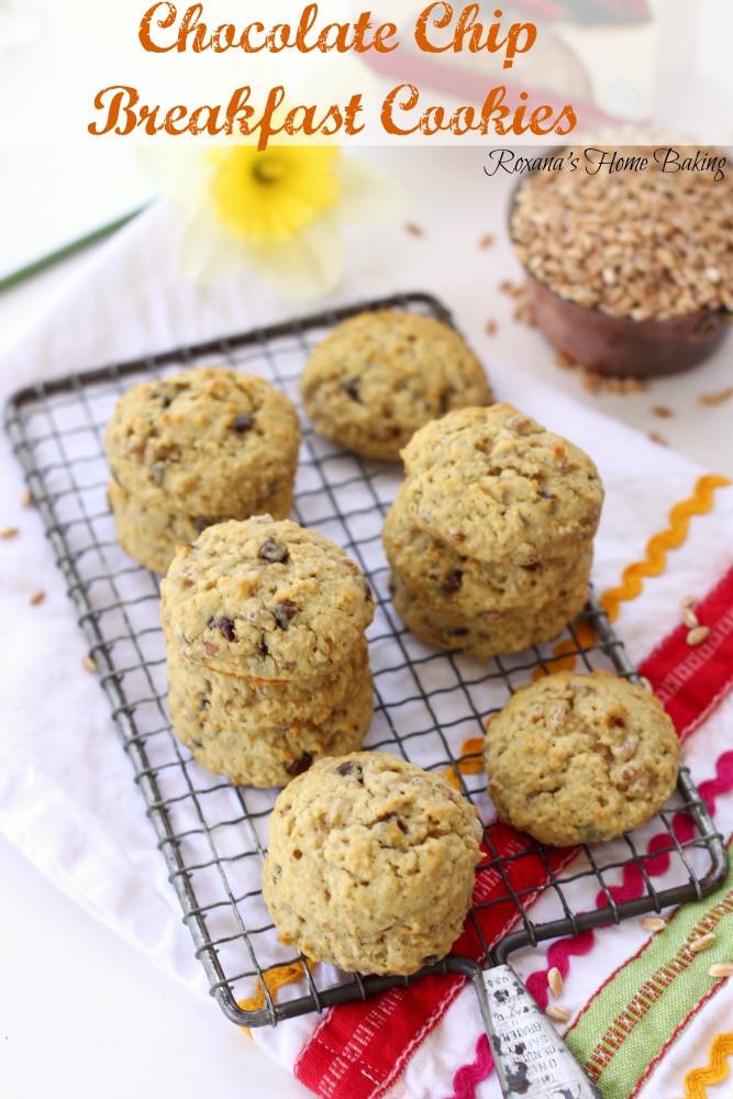 Breakfast Cookie Recipes  Chocolate chip breakfast cookies recipe