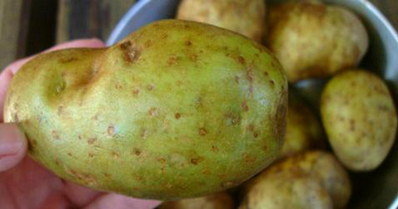 Can You Eat Potato Skin  If You Spot A Potato That Looks Like This You Might Have