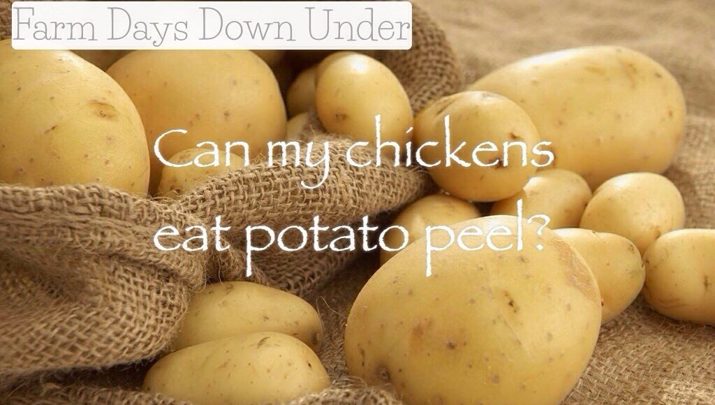Can You Eat Potato Skin  Can Chickens Eat Potato Peel Farm Days Down Under