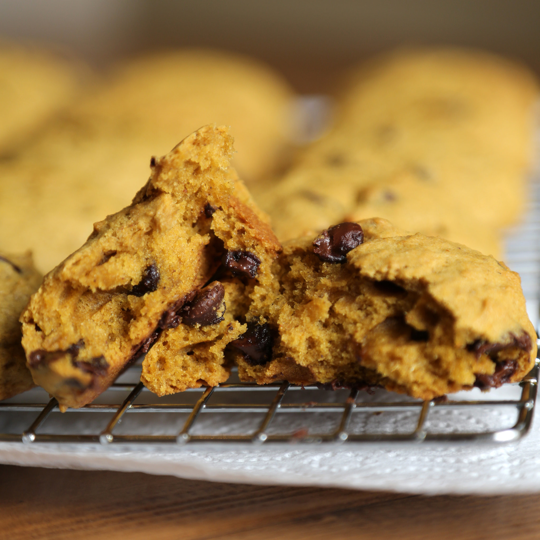 Chocolate Chip Pumpkin Cookies  Pumpkin Chocolate Chip Cookie Recipe