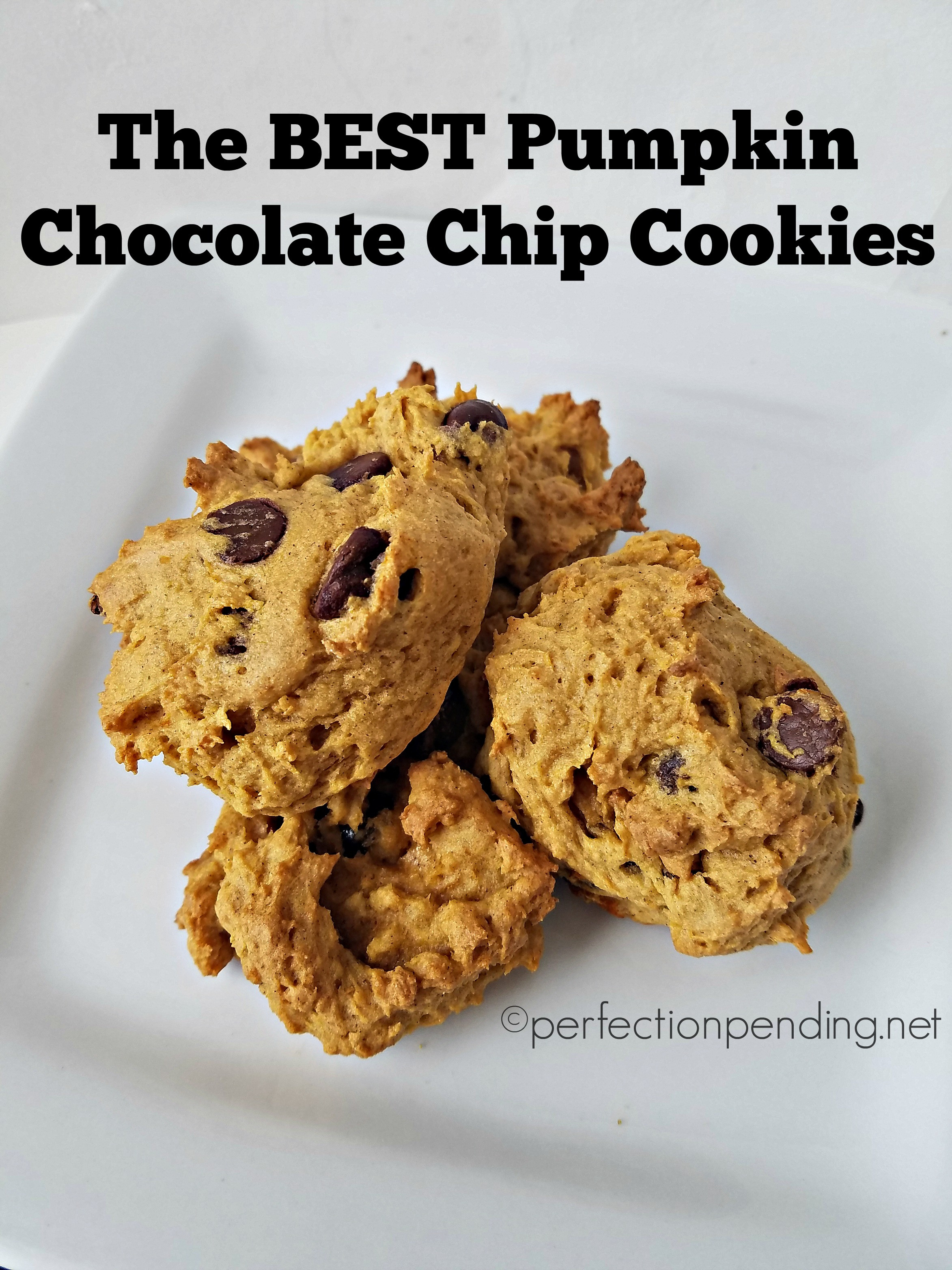 Chocolate Chip Pumpkin Cookies  best pumpkin chocolate chip cookies