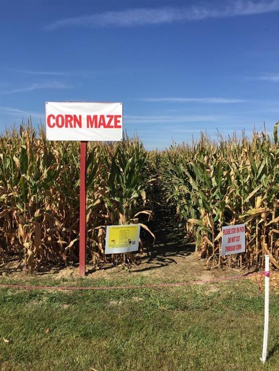 Corn Maze Indiana  Hogan Farms Pumpkin Patch and Corn Maze Indiana Haunted