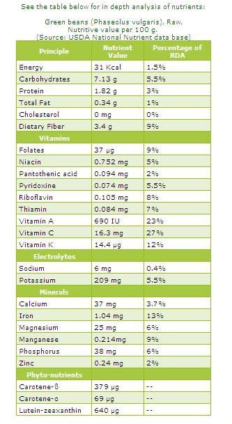 Green Bean Nutrition Facts  Health and Beauty Green beans nutrition facts