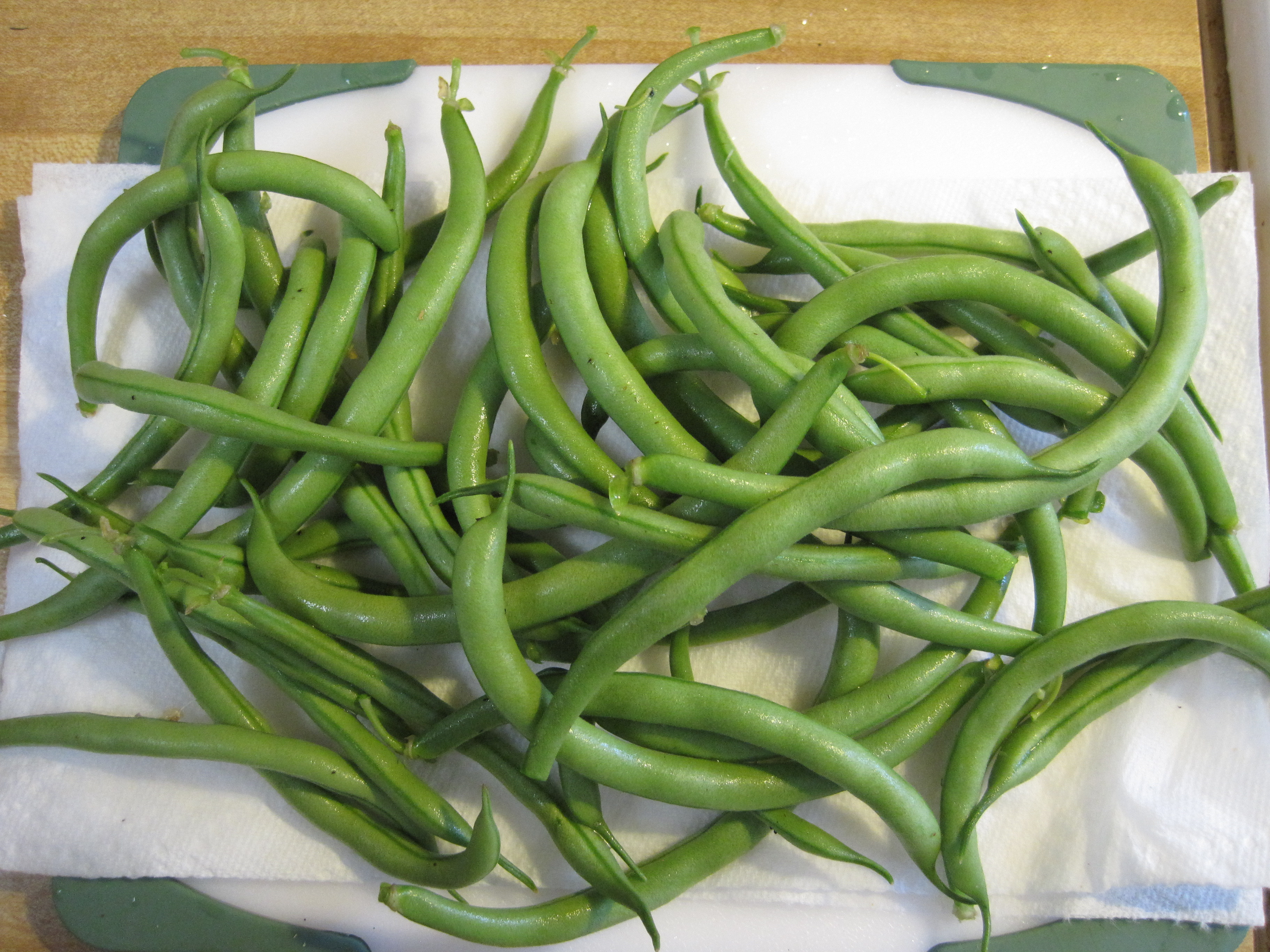 Green Bean Plants  Green Beans… from Plant to Plate in 40 Minutes