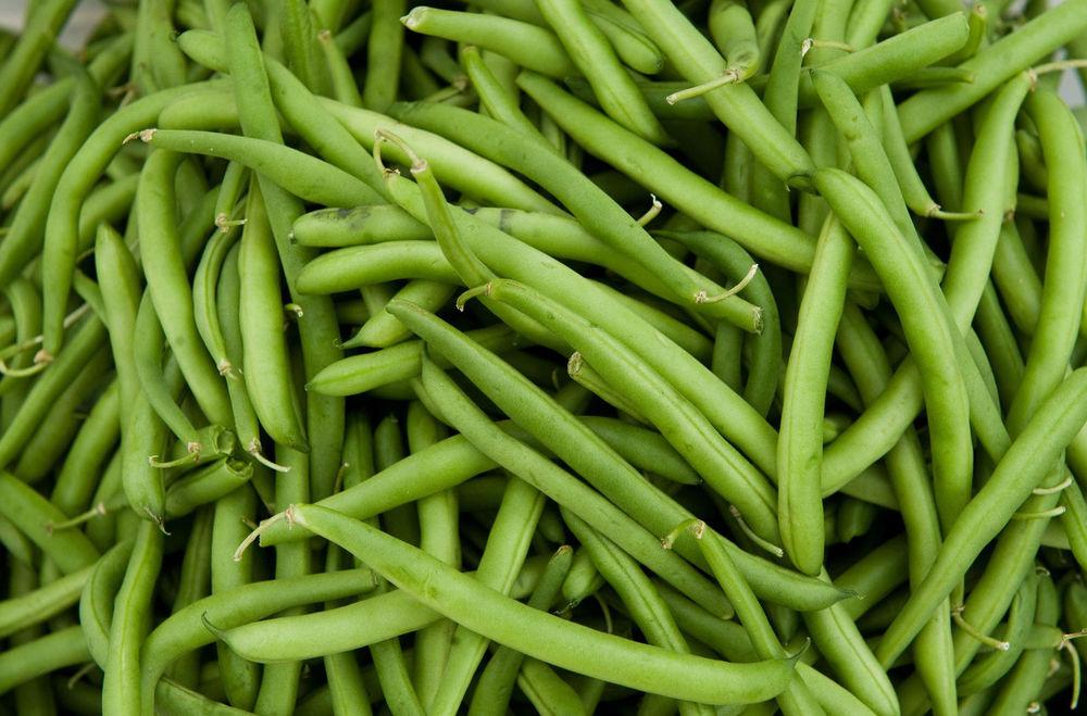 Green Bean Seeds  Green Bean Seed Tenderette Green Beans Fresh Seed FREE