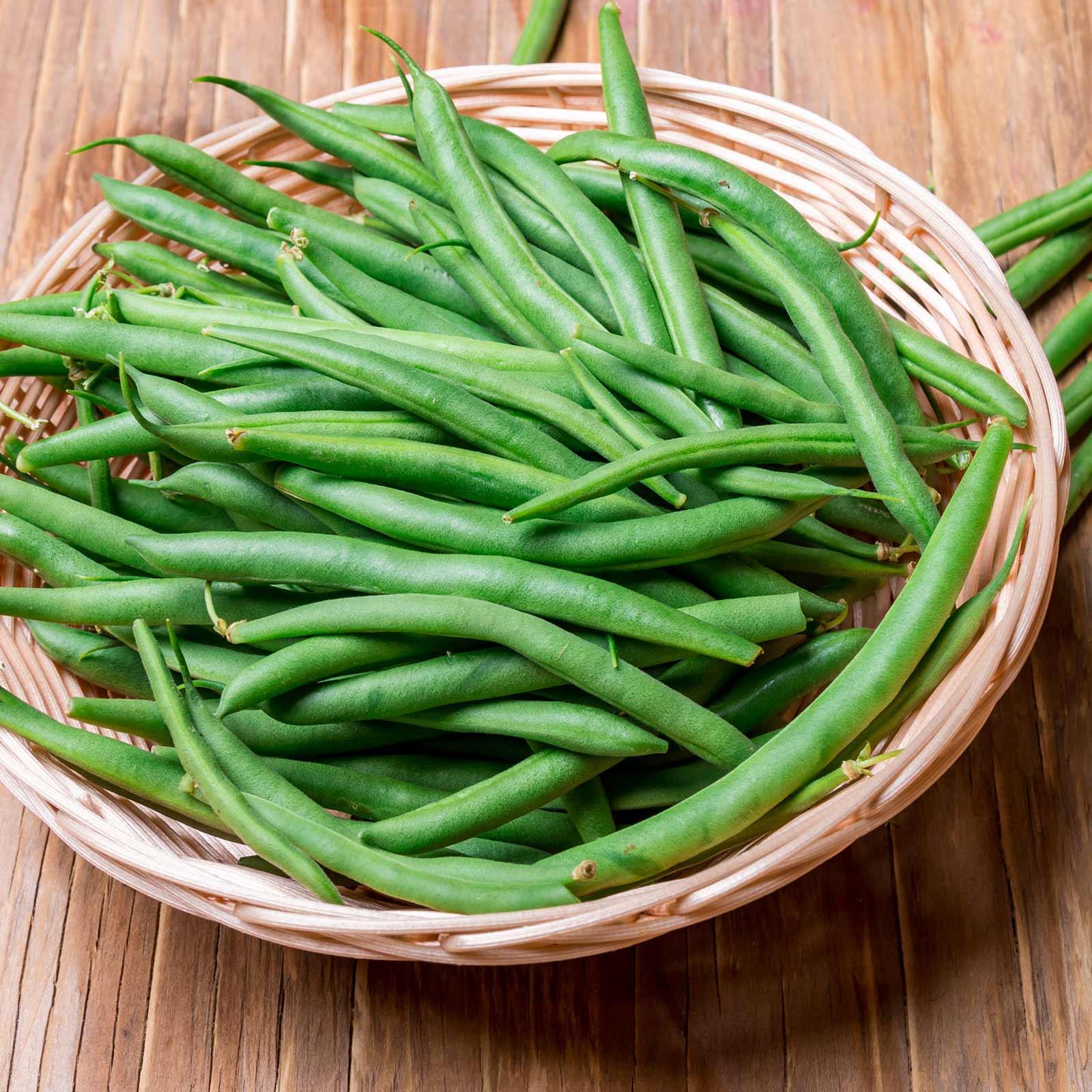 Green Bean Seeds  Harvester Bush Bean Seeds 50 Lb Bulk Non GMO Heirloom