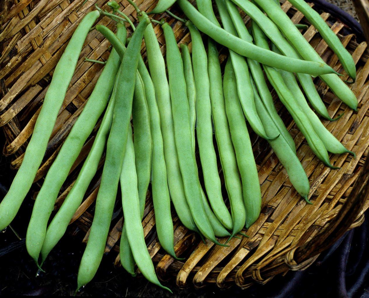Green Bean Seeds  75 Heirloom Pole Green Bean Seeds Kentucky Wonder