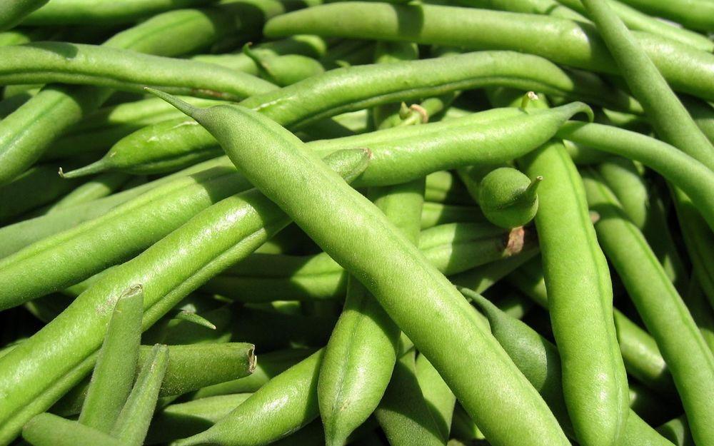 Green Bean Seeds  Green Bean Seed Landreth Stringless Bean seeds Fresh Seed