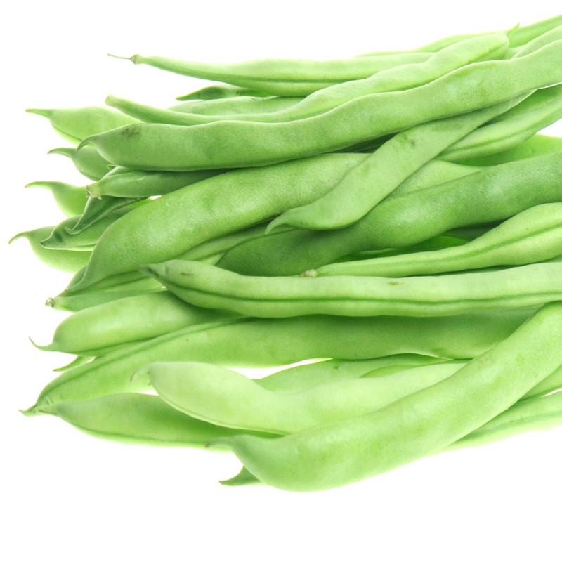 Green Bean Seeds  Green Bean Seed 15 Seeds Snap Bean Phaseolus Vulgaris L