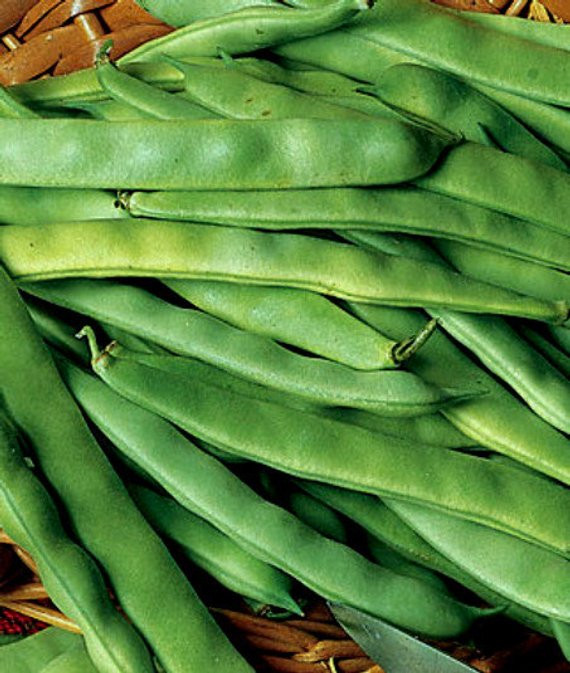 Green Bean Seeds  75 Heirloom Bush Green Bean Seeds Roma II Heirloom