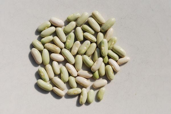 Green Bean Seeds  Green Bean Varieties Types of Green Beans