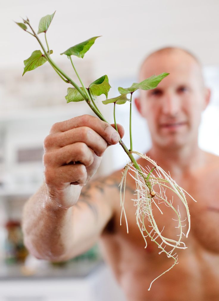 How To Grow Sweet Potato Slips  1000 images about Growing Sweet Potatoes on Pinterest