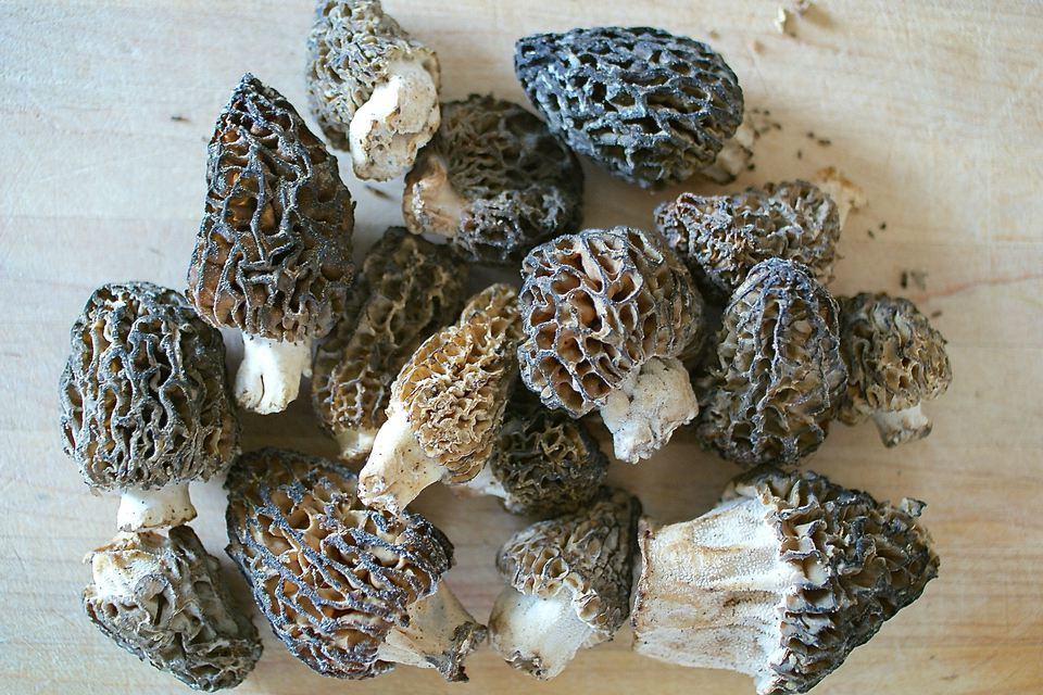 How To Store Morel Mushrooms  The Best Way to Clean Morel Mushrooms