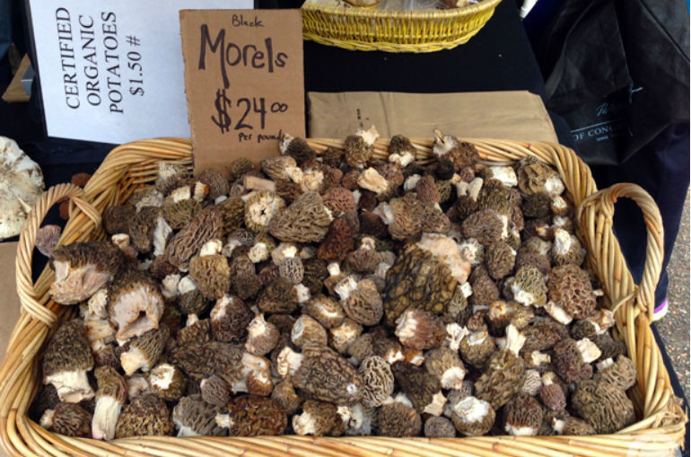 How To Store Morel Mushrooms  How to Make Money f of the Morel Mushrooms You Found