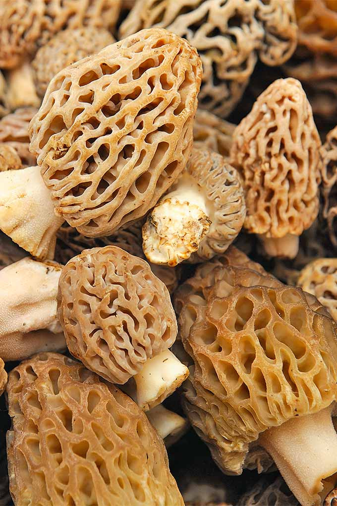 How To Store Morel Mushrooms  How to Select and Store Mushrooms for Long Lasting