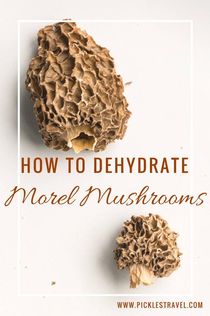 How To Store Morel Mushrooms  How to make Dehydrated Morel Mushrooms