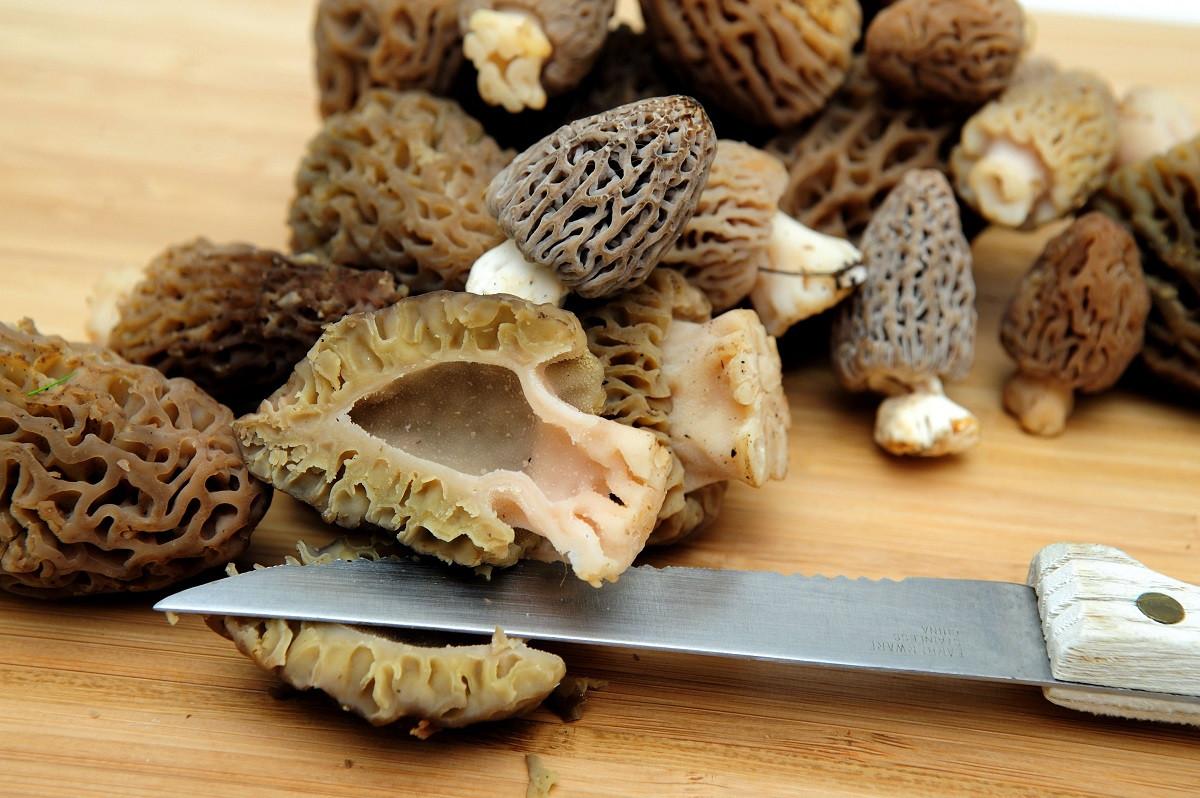 How To Store Morel Mushrooms  Morels Find Cook Eat