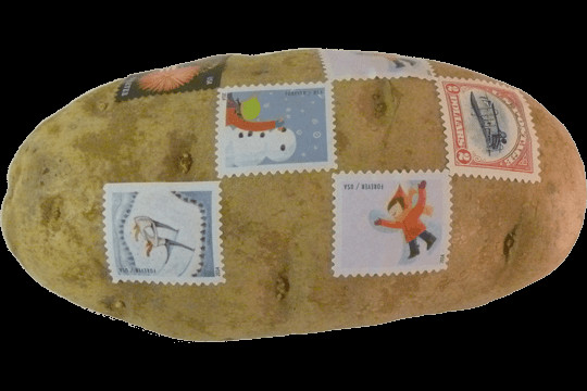Mail A Potato  Mail a Spud A Service That Mails an Unpackaged Stamp
