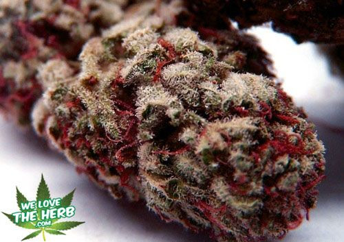 Strawberry Shortcake Strain  139 best Strains To Try images on Pinterest