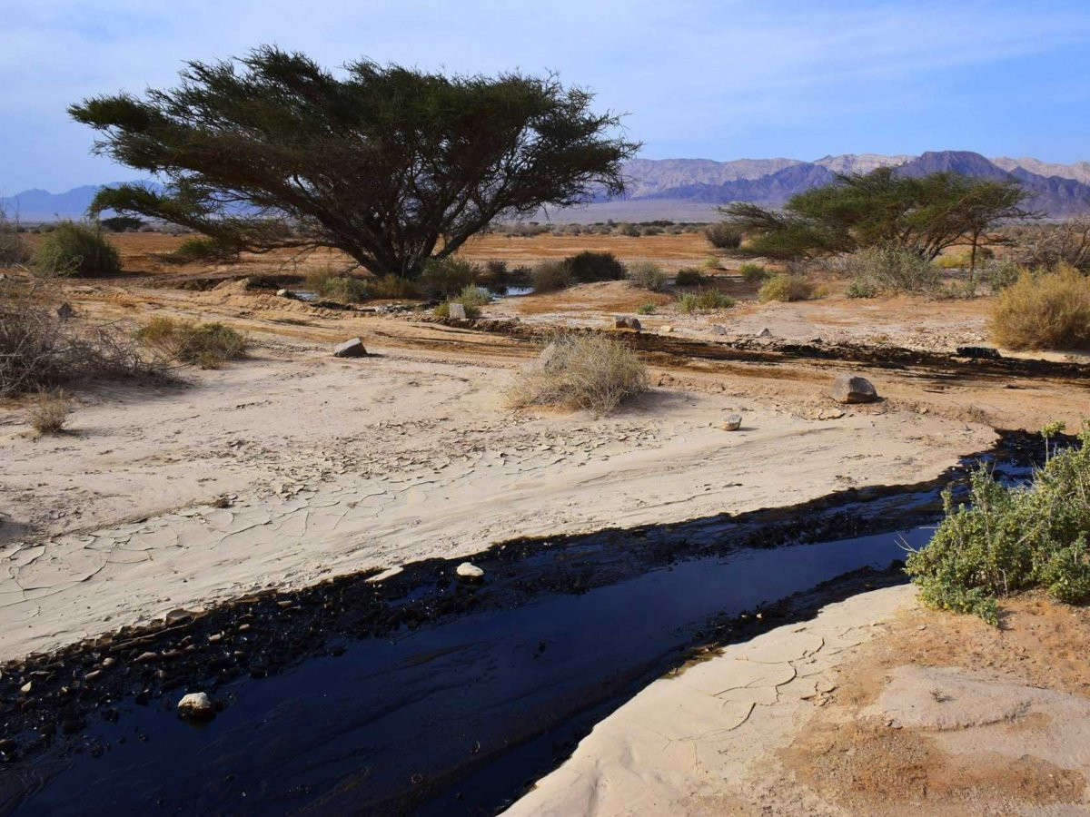 Streams In The Dessert  Restore our Fortunes Like Streams Biblical Israel Tours