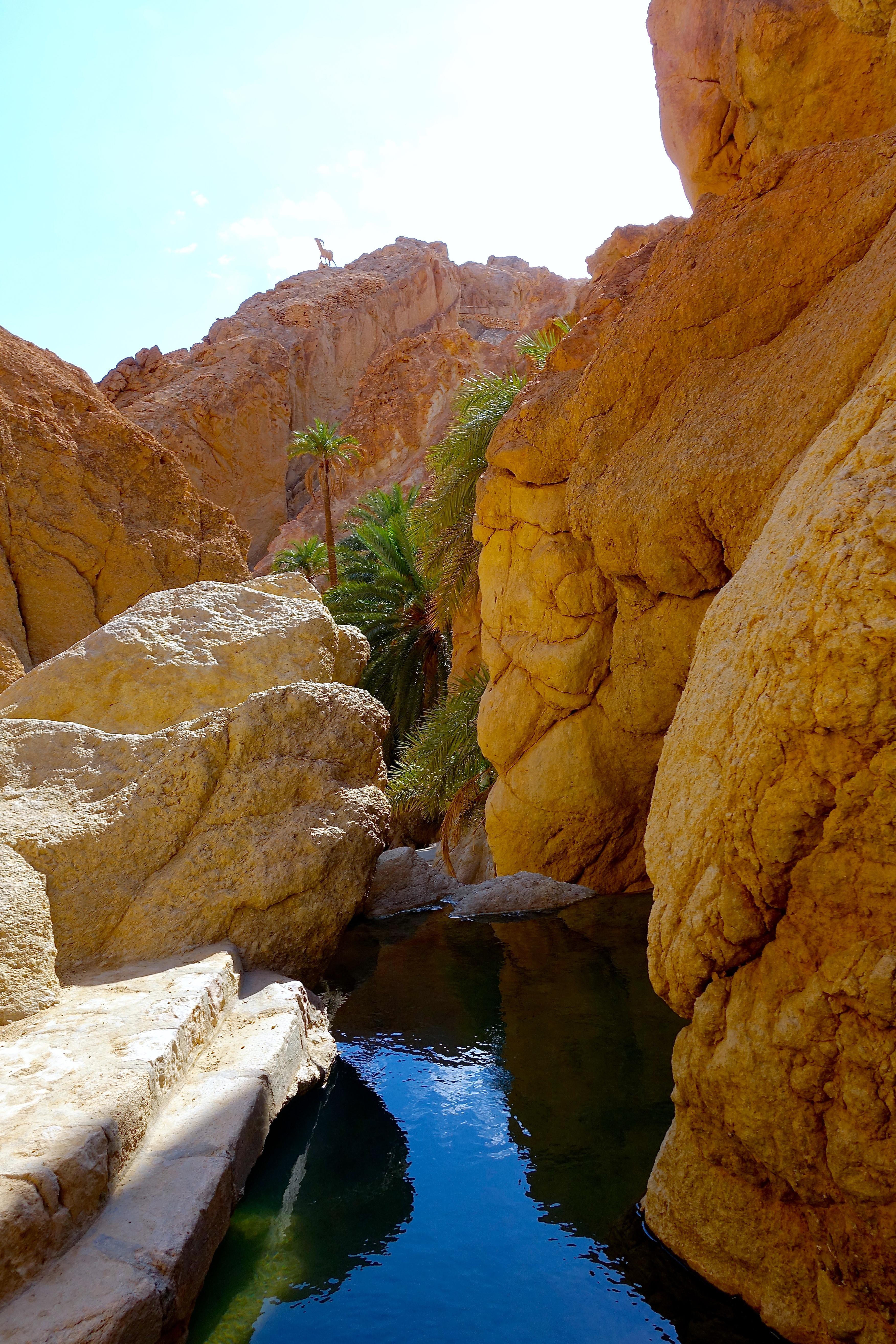 Streams In The Dessert  Streams in the desert Tunisian wilderness finding a