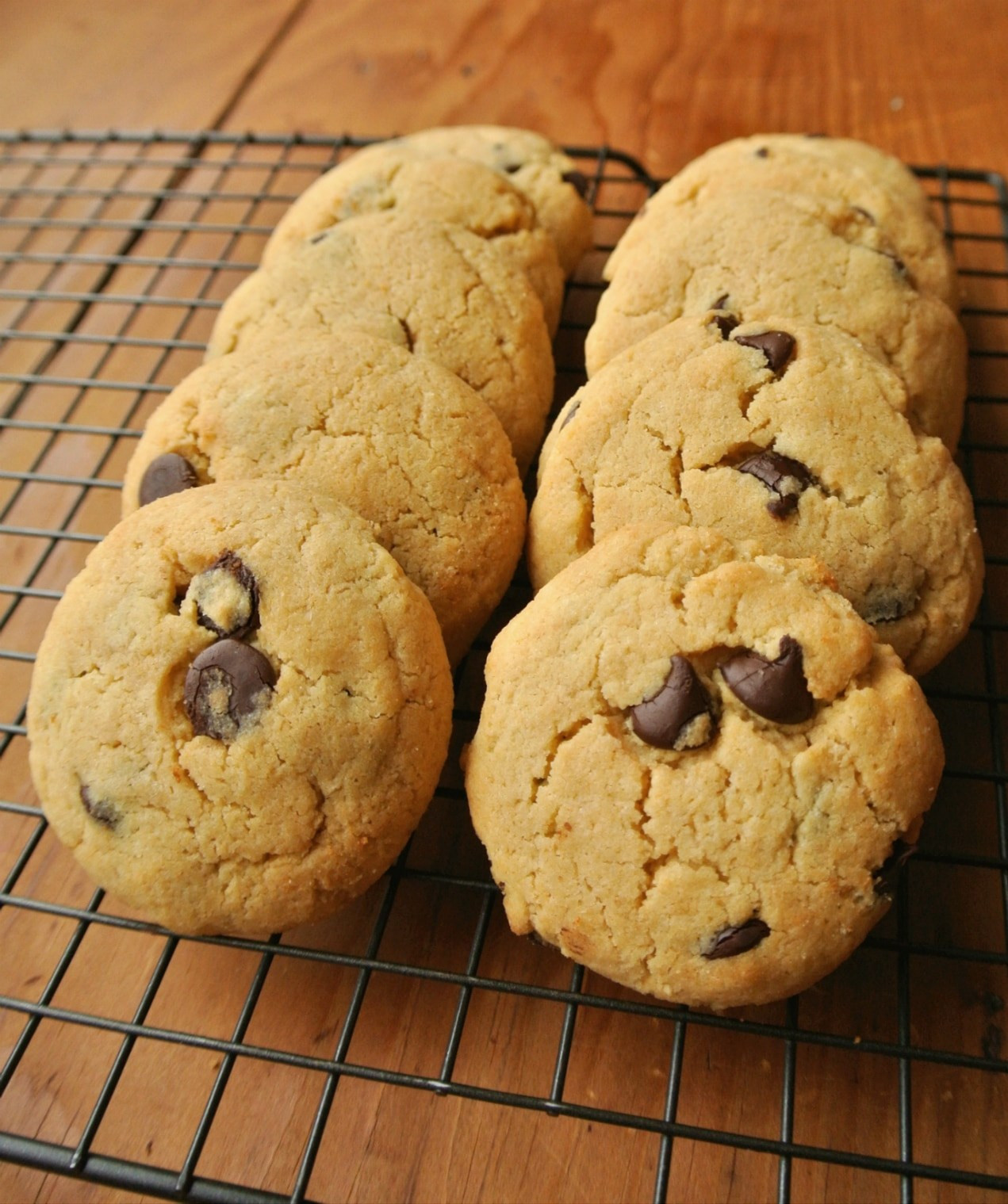 """Sugar Free Chocolate Chip Cookies  Search Results for """"Chocolate cookie"""""""