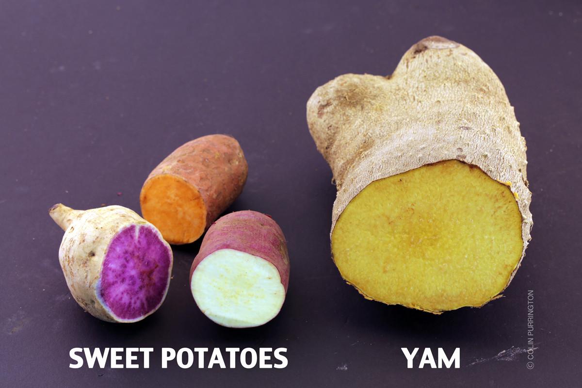 Sweet Potato Vs Yam  Yams versus sweet potatoes Colin Purrington