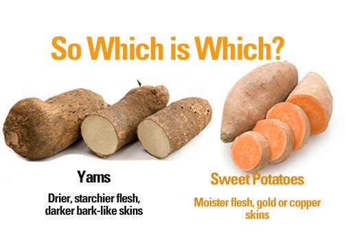 Sweet Potato Vs Yam  Yams and Sweet Potatoes Not the Same FYI Cynthia