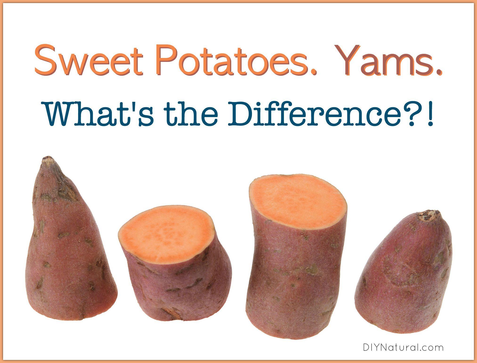 Sweet Potato Vs Yam  Sweet Potato Yams Is there a Difference