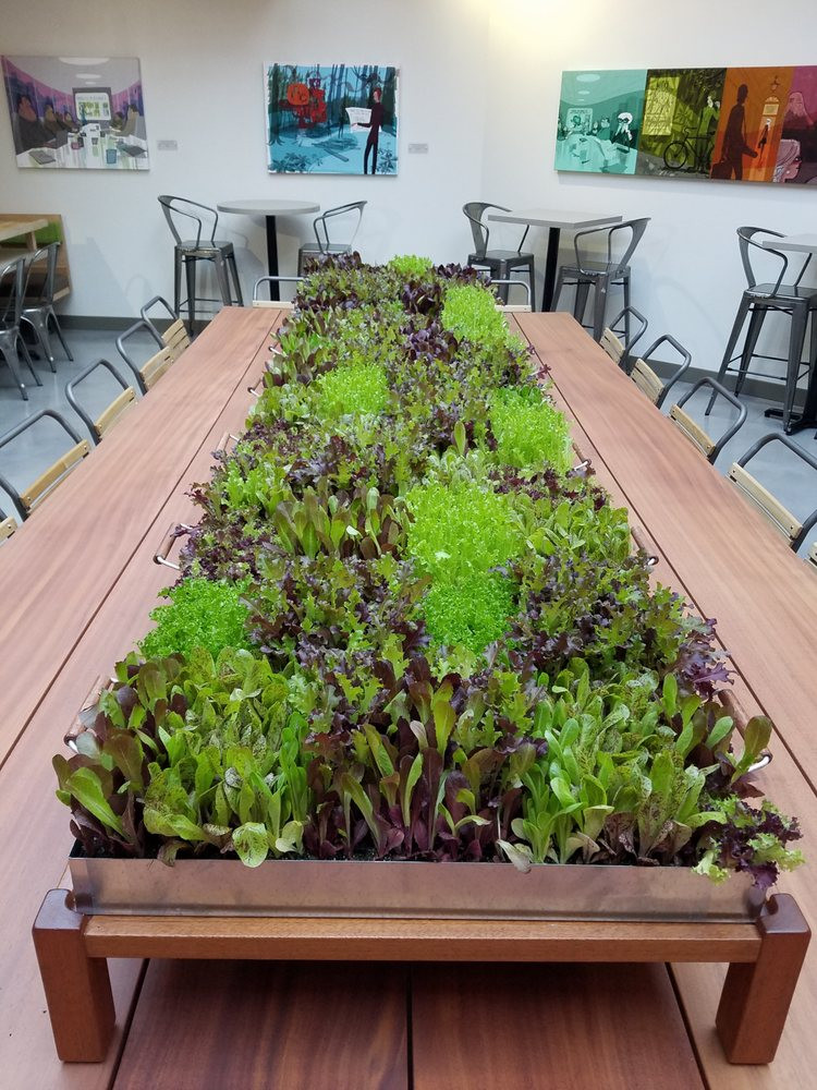 Tender Greens Westwood  Lettuce Table Center Piece for munal Table Yelp