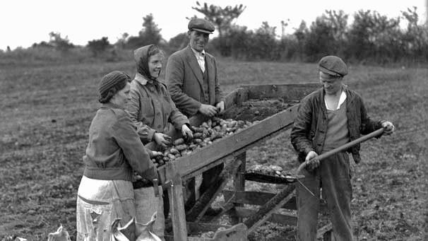 The Great Potato Famine  Irish American Journey Irish Immigration to America How