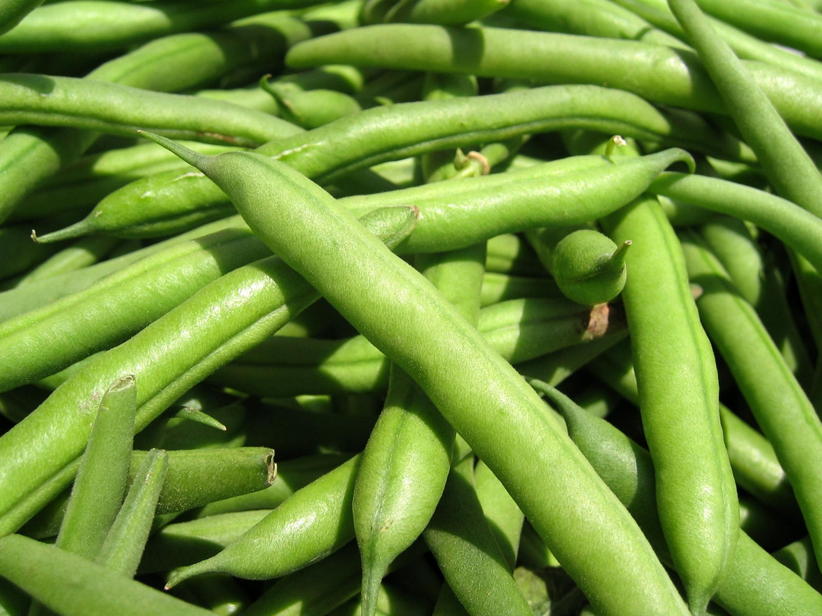 The Green Bean  Green Bean Juice in Order to Treat Diabetes