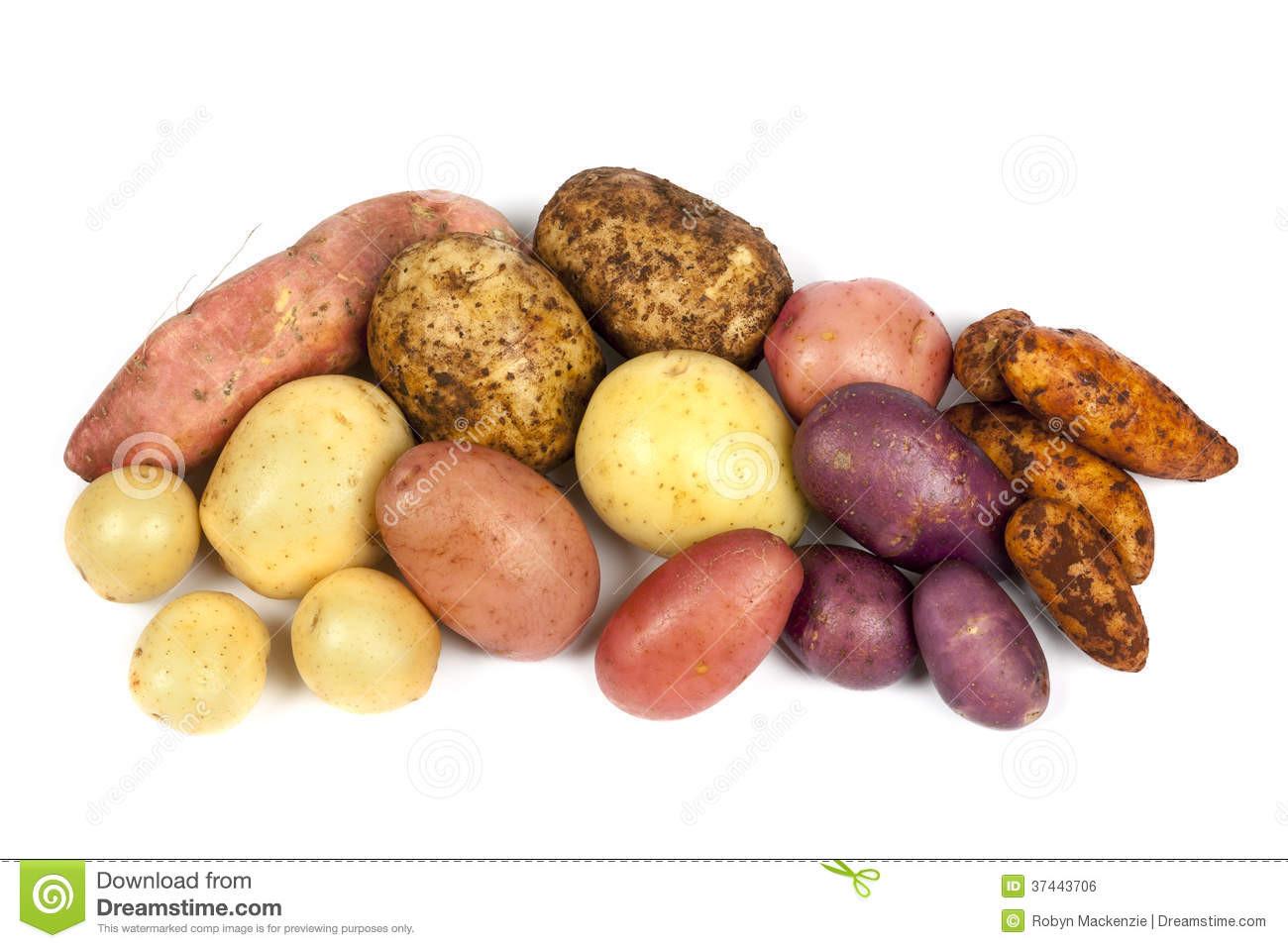 Types Of Potato  Potato Varieties Isolated White Stock Image