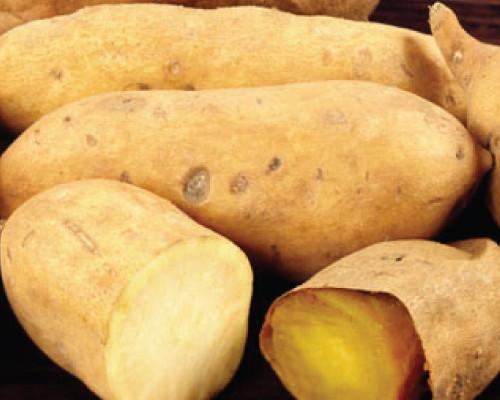 White Sweet Potato  White Yam Sweet Potato Slips Urban Farmer Seeds