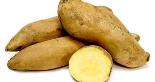 White Sweet Potato  General Sweet Potato Information Resource Smart