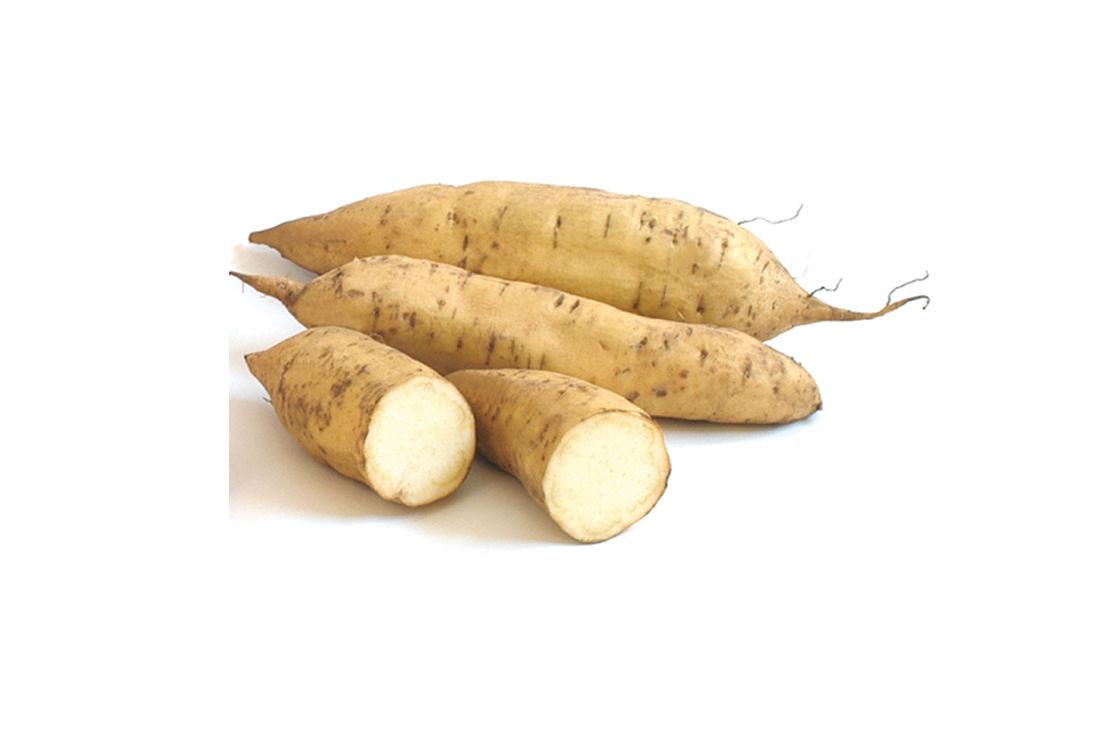 White Sweet Potato  White Yam
