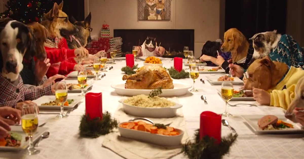 Around The Dinner Table  Safe Holiday Foods for Dogs