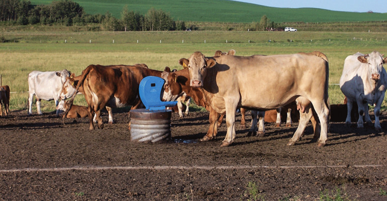 Beef It'S What'S For Dinner  A waterer that never freezes It s true