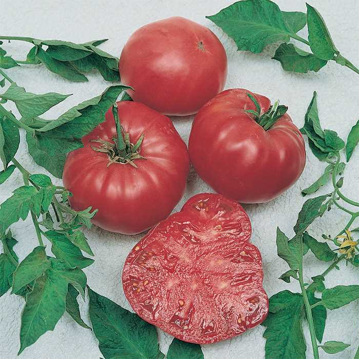 Beefsteak Tomato Plant  Watermelon Beefsteak Tomato