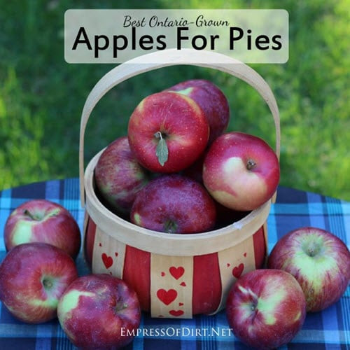 Best Apple For Pie  Best Apples For Pies Homestead & Survival