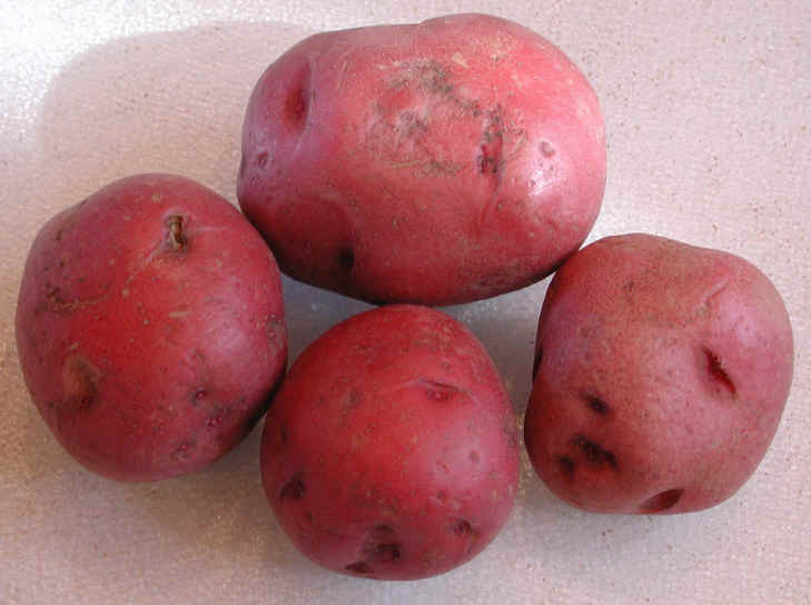 Calories In A Red Potato  Nutritional Value of Red Skin Potatoes