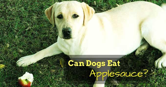 Can Dogs Have Applesauce  When to Worry About Black Spot Dogs' Skin NolongerWild