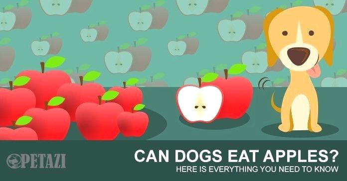Can Dogs Have Applesauce  Can Cats Eat Applesauce Human Food For Cats Do Cats Eat
