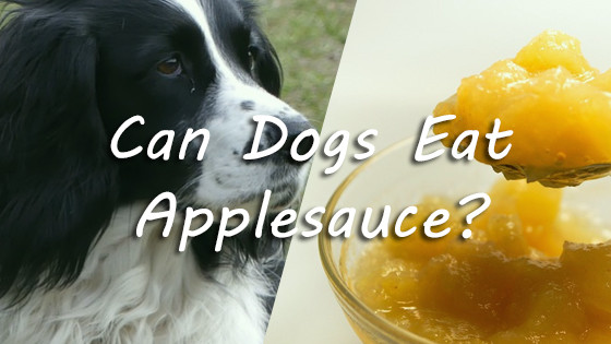Can Dogs Have Applesauce  Can Dogs Eat Applesauce