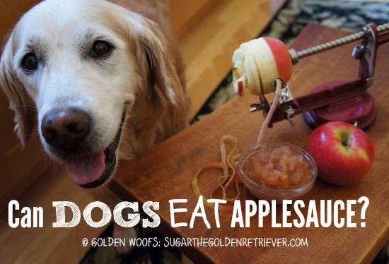 Can Dogs Have Applesauce  Make Your Own Dog Safe Applesauce Golden Woofs