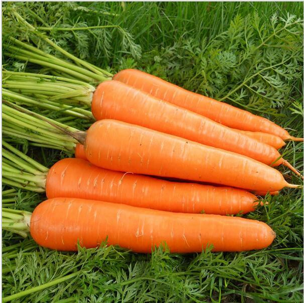 Carrot Fruit Or Vegetable  2019 Packet Seeds Carrot Seed Good Taste Yard Potted