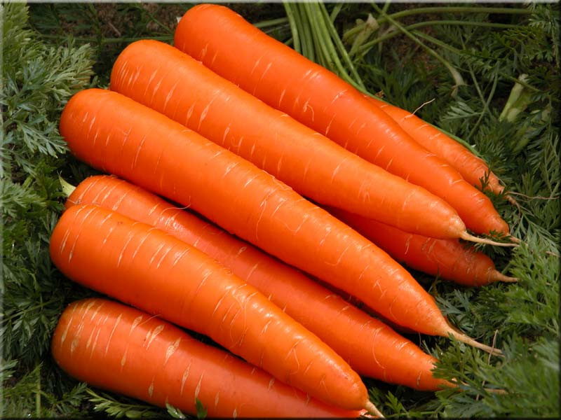 Carrot Fruit Or Vegetable  38 Fruit And Ve able Names In France Fruit Names A Z