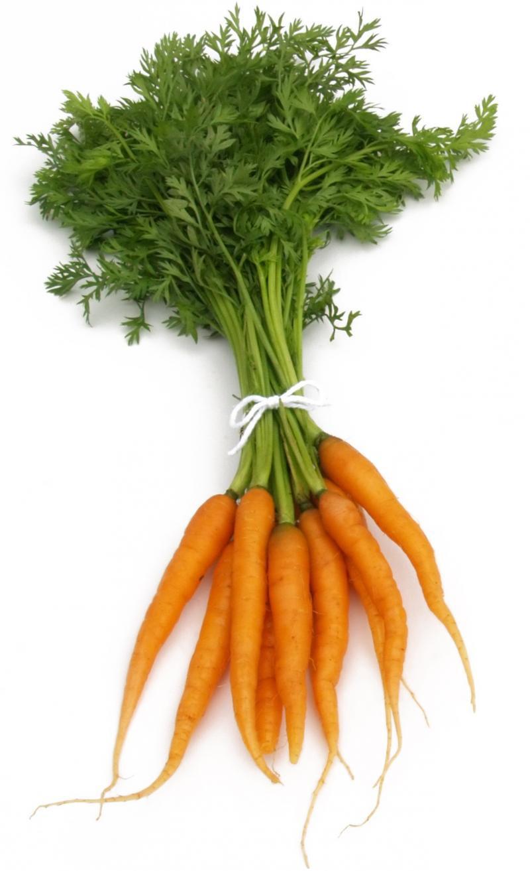 Carrot Fruit Or Vegetable  Riceplex Global Carrot Powder Organic