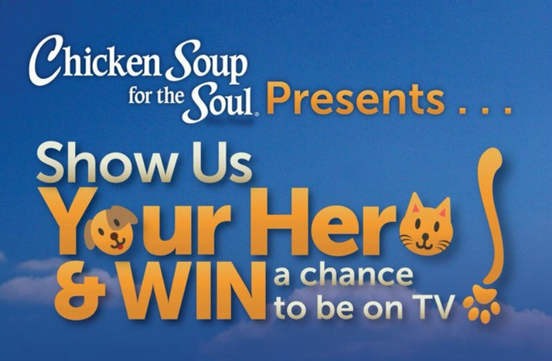 Chicken Soup For The Soul Submissions  5 Ways I Show My Pets Love LoveYourPetEveryDay Miss