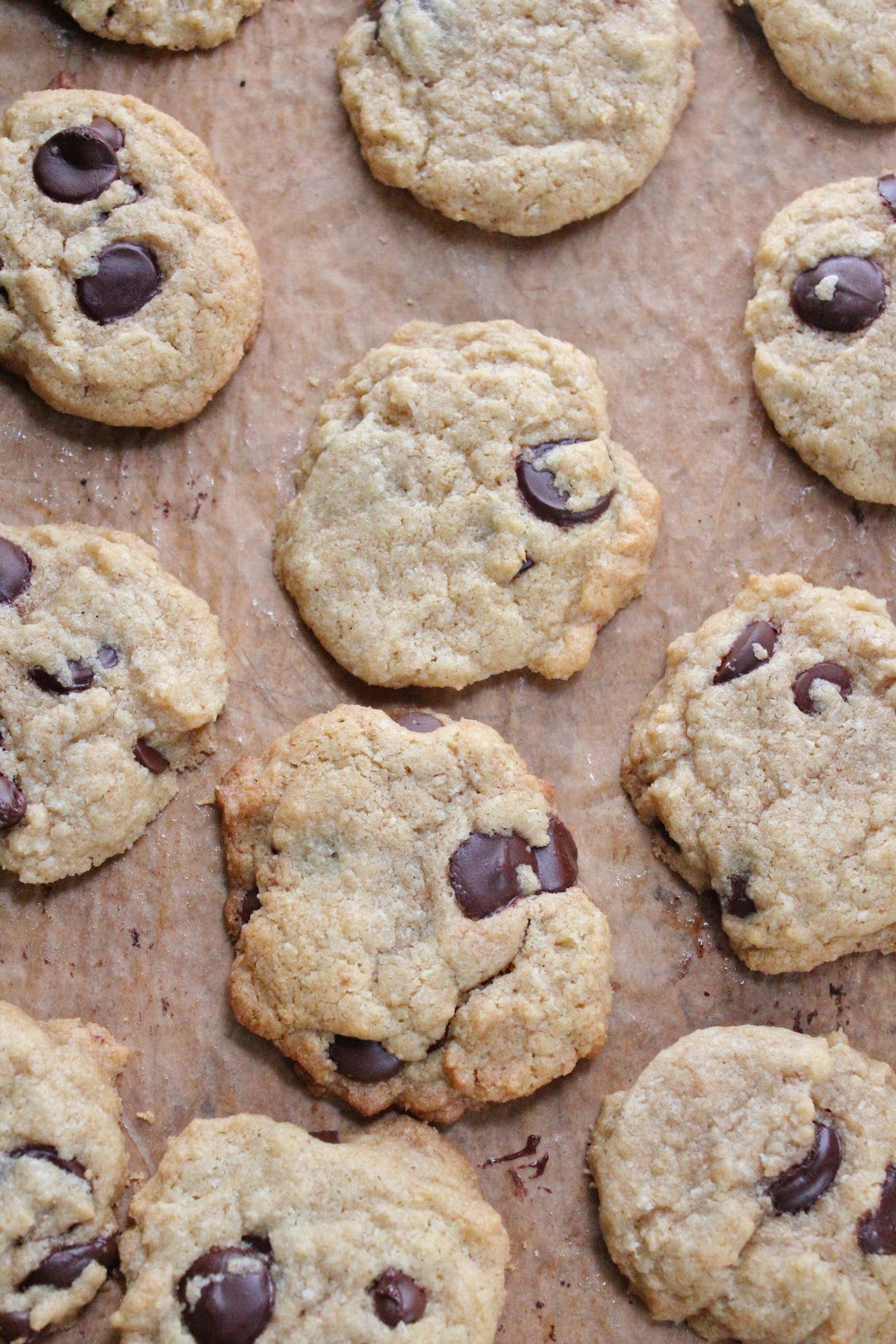 Coconut Chocolate Chip Cookies  coconut chocolate chip cookie